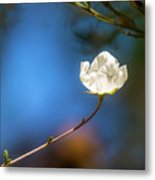 Alone In The Wind Metal Print