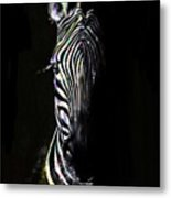 Zebra Fade Into Light Metal Print
