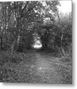 Along A Woodland Path Metal Print