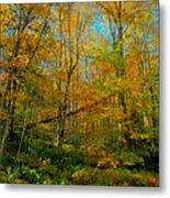 Along The Lock And Dam Trail Metal Print