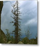 Along The Needles Highway Metal Print