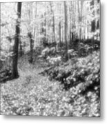Along The Path Bw  Metal Print