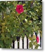 Along The Picket Fence Metal Print