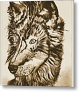 Alpha Male - The Wolf - Antiqued Metal Print