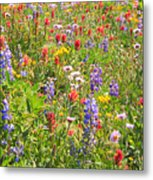 Alpine Glory In Canada Metal Print
