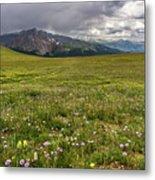 Alpine Meadow Before Mount Guyot Metal Print