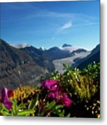 Alpine Meadow Flowers Overlooking Glacier Metal Print