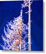 Alpine Snowy Trees 2 Pddbae2 Metal Print