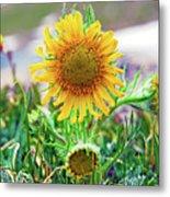Alpine Sunflower In Summer Metal Print