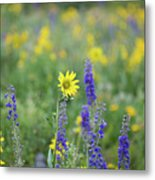 Alpine Sunflower Metal Print