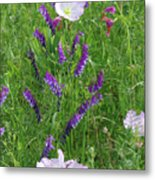 Alpine Vetch And Primroses Metal Print