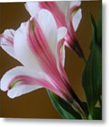 Alstroemerias - Together Metal Print