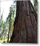 Alta Vista Giant Sequoia Metal Print