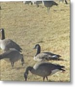 Always One In Every Crowd--thank God Metal Print