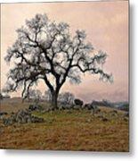 Amador Oak Metal Print