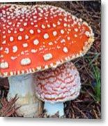 Amanita Muscaria - Red Mushroom Metal Print