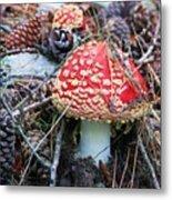 Amanita Mushroom Metal Print by Michele Penner