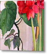 Amaryllis And Begonia Metal Print