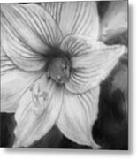 Amaryllis And Tree Frog Painted Bw Metal Print