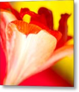 Amaryllis Shadow Abstract Flower With Shadow On Red And Yellow Metal Print
