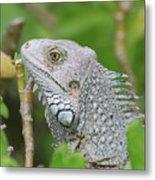 Amazing Gray Iguana Sitting In The Top Of A Bush Metal Print