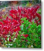 Amazing Nature Blessings Magic Colors Cherry Red Green Shrubs Plants Save  The Environment Metal Print