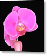 Amazing Pink Orchid With Black Background Orquidea Metal Print