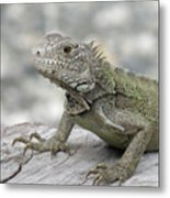 Amazing Posing Gray Iguana Perched On A Log Metal Print