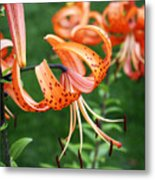 Amazing Tiger Lily Metal Print