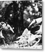 Amazon: Anteater Metal Print