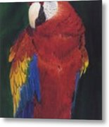 Amazonian Rainbow Metal Print