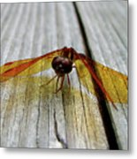 Amber Dragonfly Metal Print