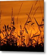 Amber Sundown Meadow Grass Silhouette  Metal Print