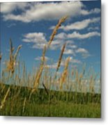 Amber Waves Of Grain Metal Print