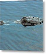 American Alligator Profile Metal Print