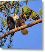 American Bald Eagle 3 Metal Print