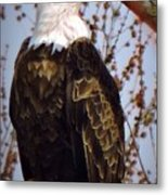 American Bald Eagle - Iowa Metal Print