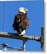 American Bald Eagle On Communication Tower Metal Print