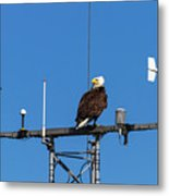 American Bald Eagle Perched On Communication Tower Metal Print