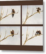 American Bald Eagle Progression Metal Print