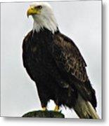 American  Bird Metal Print
