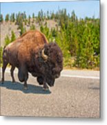 American Bison Sharing The Road In Yellowstone Metal Print