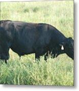 American Cow Metal Print