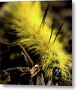 American Dagger Moth Caterpillar Metal Print
