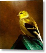 American Gold Finch In Texture Metal Print