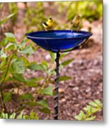 American Goldfinch At Water Bowl Metal Print