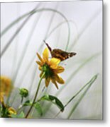 American Lady Butterfly Balancing By The Sea  Metal Print