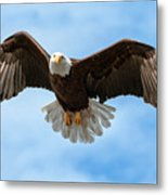 American National Symbol Bald Eagle With Wings Spread Metal Print