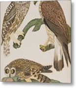 American Owl Metal Print