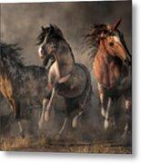 American Paint Horses Metal Print